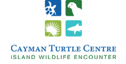 Cayman Turtle Centre : Island Wildlife Encounter